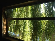 willow window